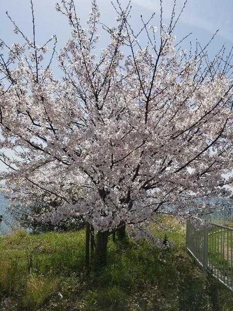 f:id:ashiyamiwa:20210404151335j:image