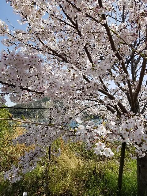 f:id:ashiyamiwa:20210404151401j:image