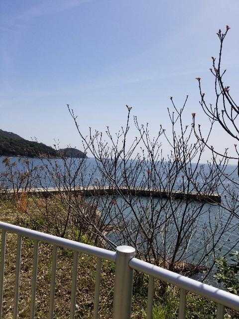 f:id:ashiyamiwa:20210404153013j:image
