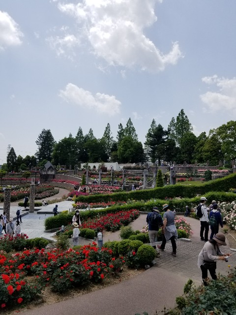 f:id:ashiyamiwa:20210510094916j:image