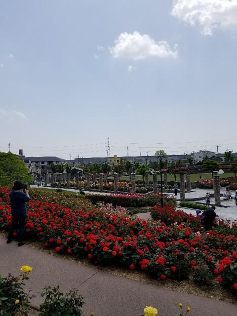 f:id:ashiyamiwa:20210510094942j:image