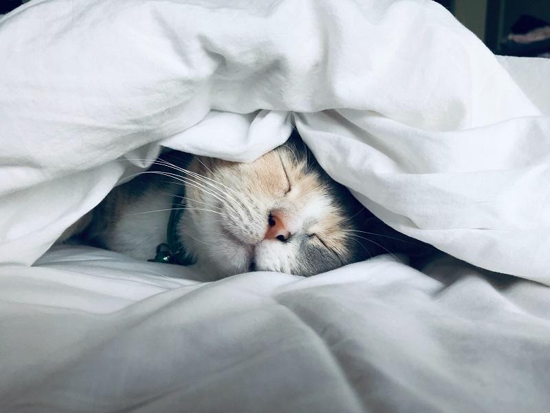やりたいことがない猫