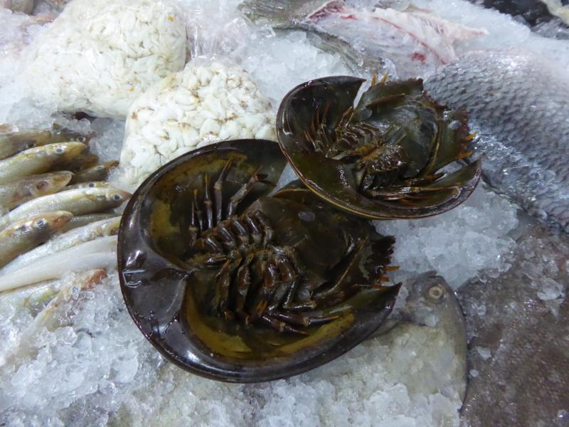 [Horseshoe Crab]