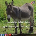 Exporting donkeys for the Gulf