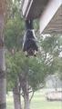 [Bat]