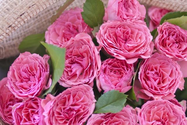 ローズの精油1滴抽出するために必要なバラの花