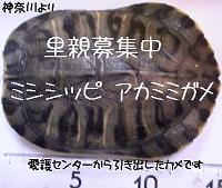 f:id:asleep_cats:20100721195344j:image:left
