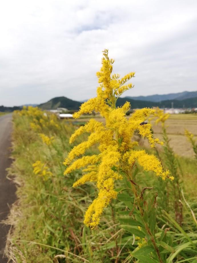 f:id:asoiyashi:20181017133944j:plain