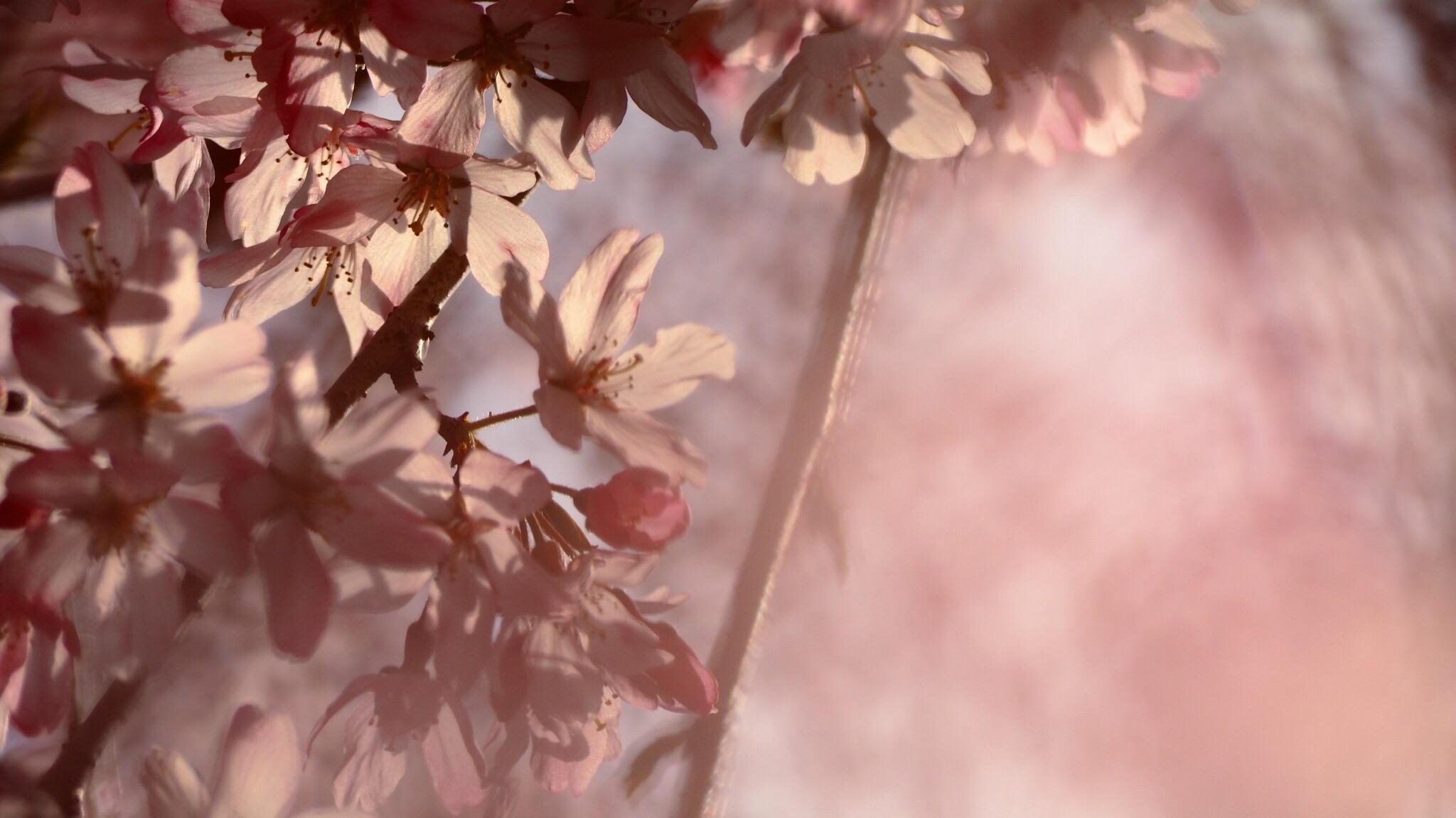 f:id:asparadiseki:20170405000940j:image
