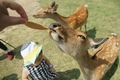 [奈良][生き物]鹿
