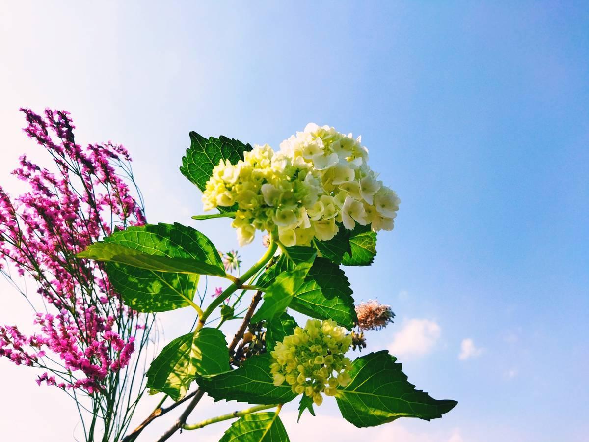 空を背景にした花々
