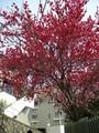 [花]神戸の赤