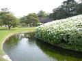 岡山後楽園の白