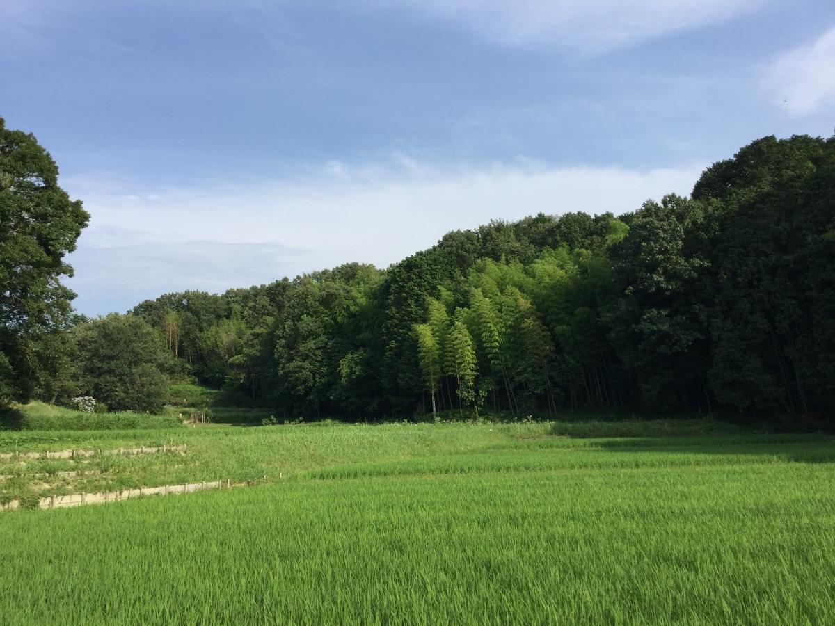 f:id:asuka-atopi:20200705173523j:plain