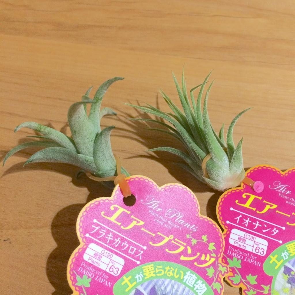f:id:asuka-hiraya:20170827105458j:plain