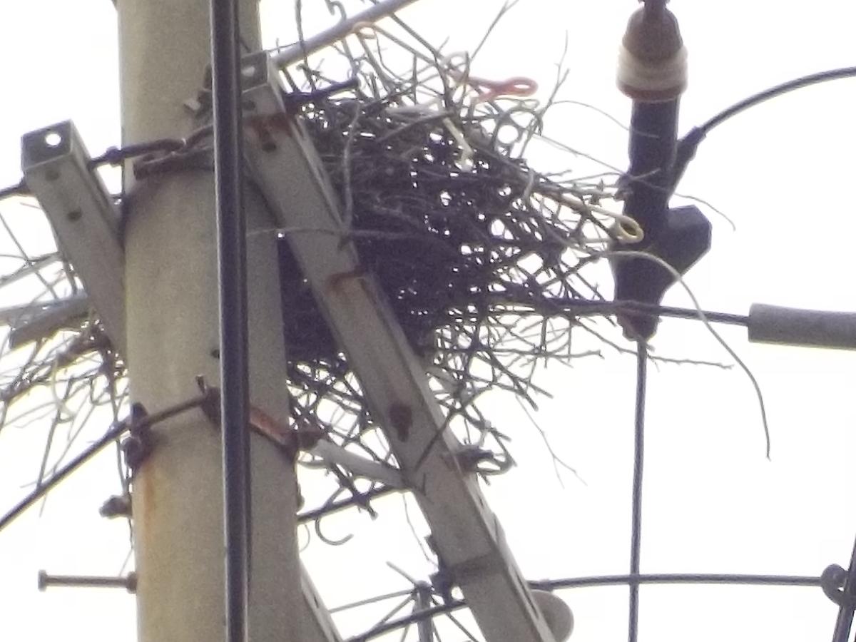 電柱の上に作られたカラスの巣