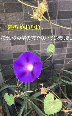 f:id:asumirai446:20170914210430j:plain