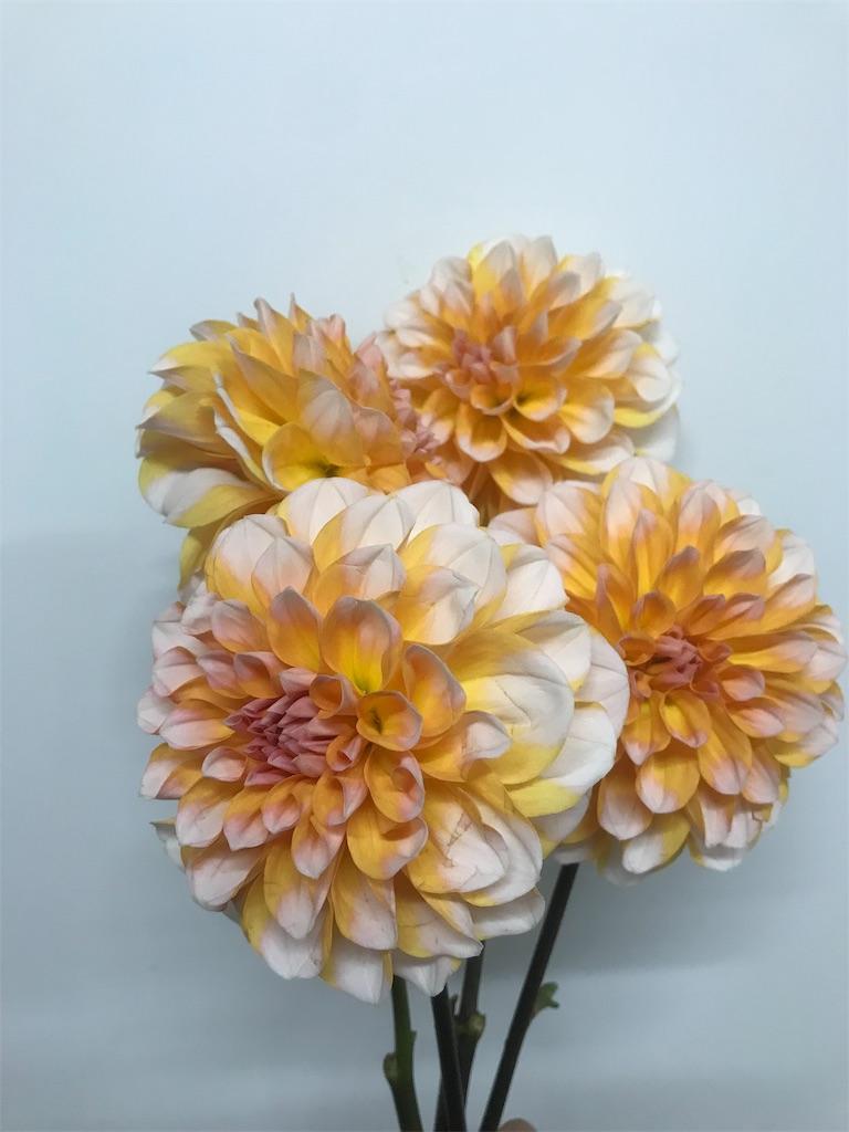 f:id:asunaro-flower:20190118004155j:image