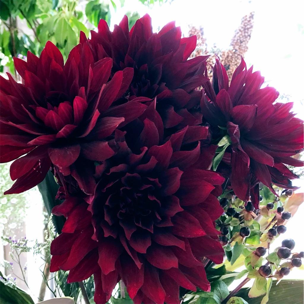 f:id:asunaro-flower:20190118122324j:image