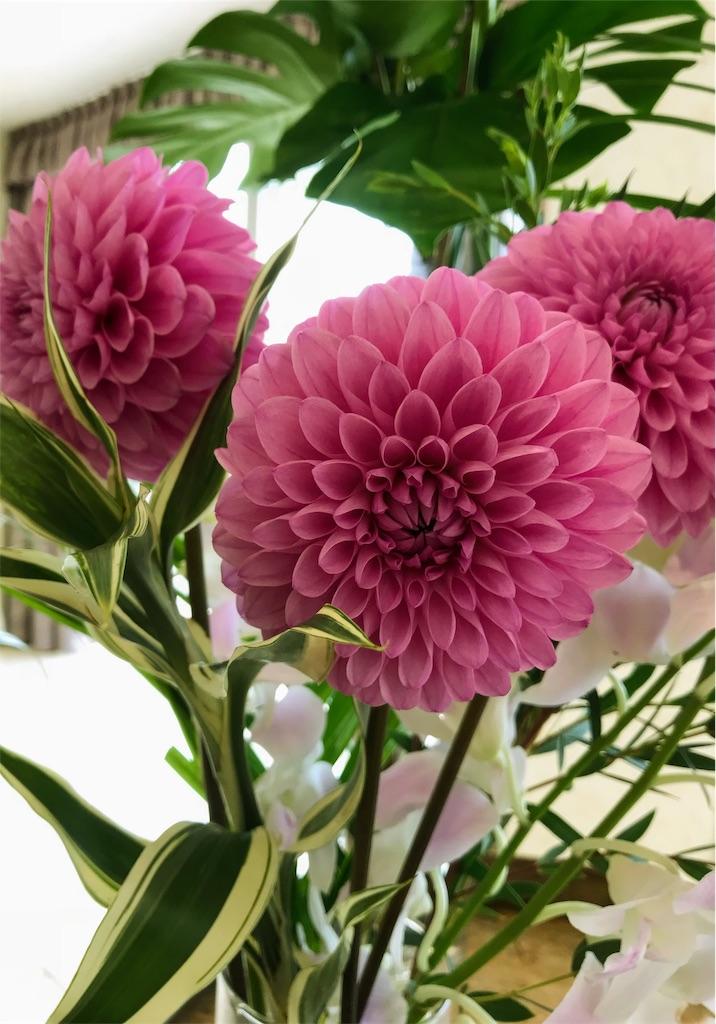 f:id:asunaro-flower:20190118124426j:image