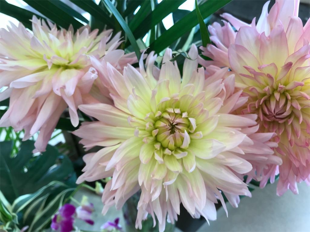 f:id:asunaro-flower:20190118125930j:image