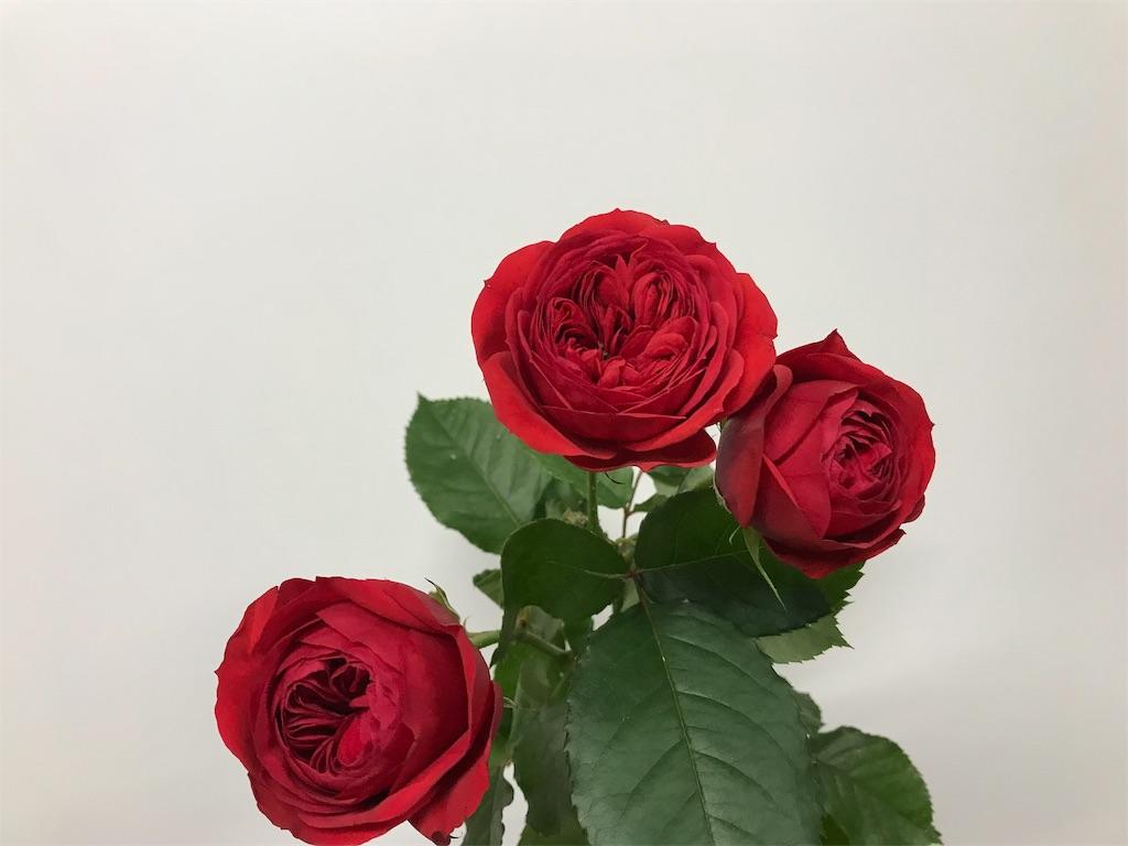 f:id:asunaro-flower:20190124163001j:image