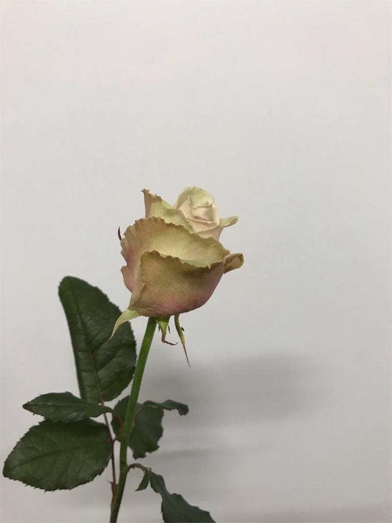 f:id:asunaro-flower:20190124163836j:image