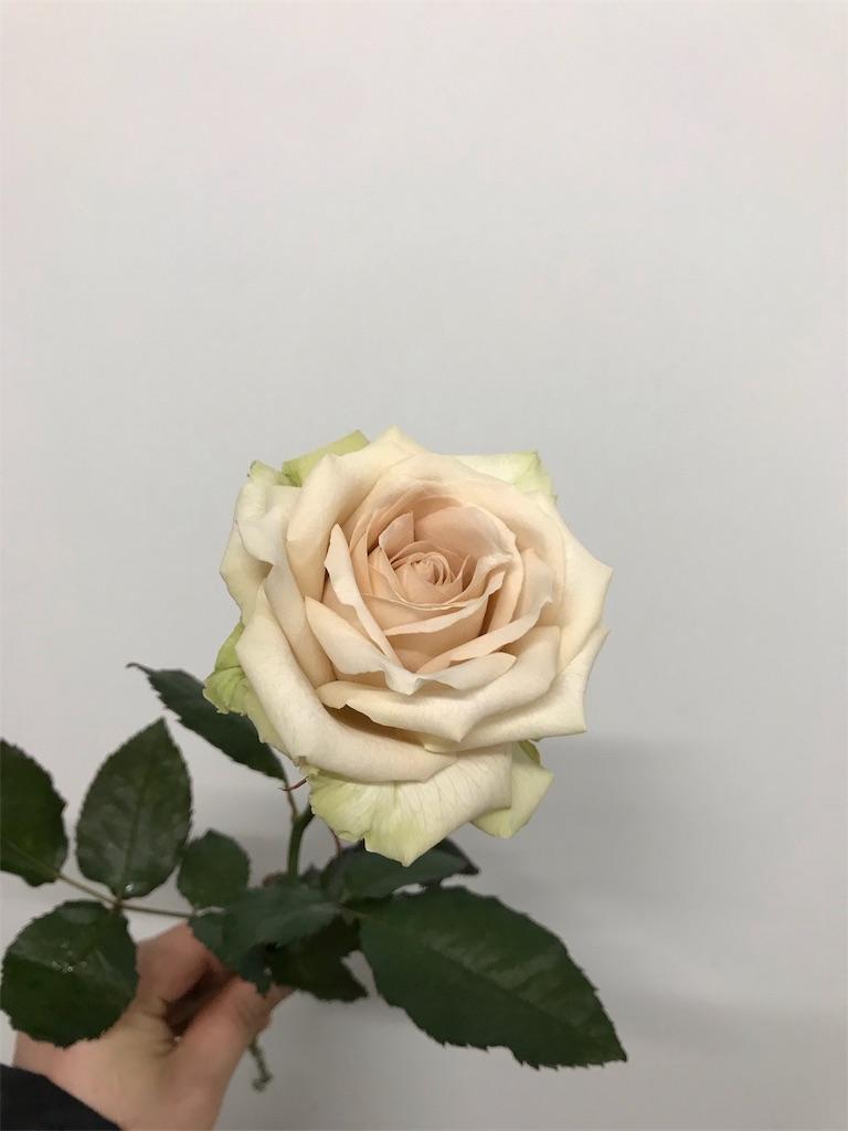 f:id:asunaro-flower:20190124164120j:image