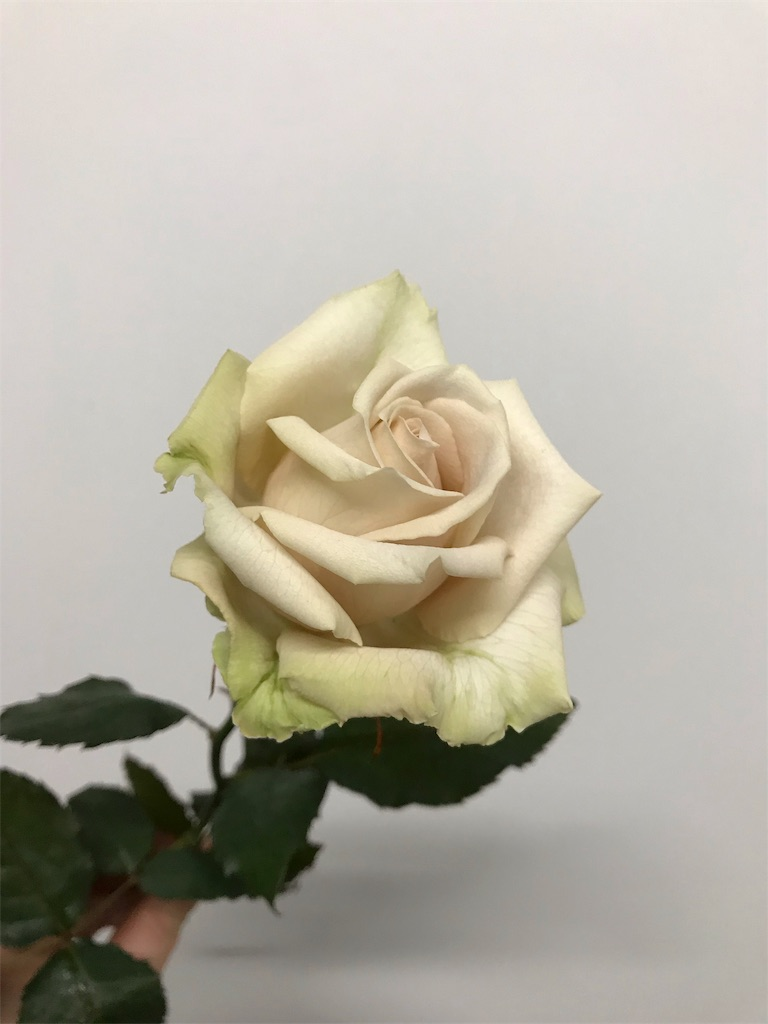 f:id:asunaro-flower:20190124164703j:image