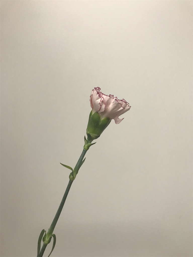 f:id:asunaro-flower:20190124165256j:image