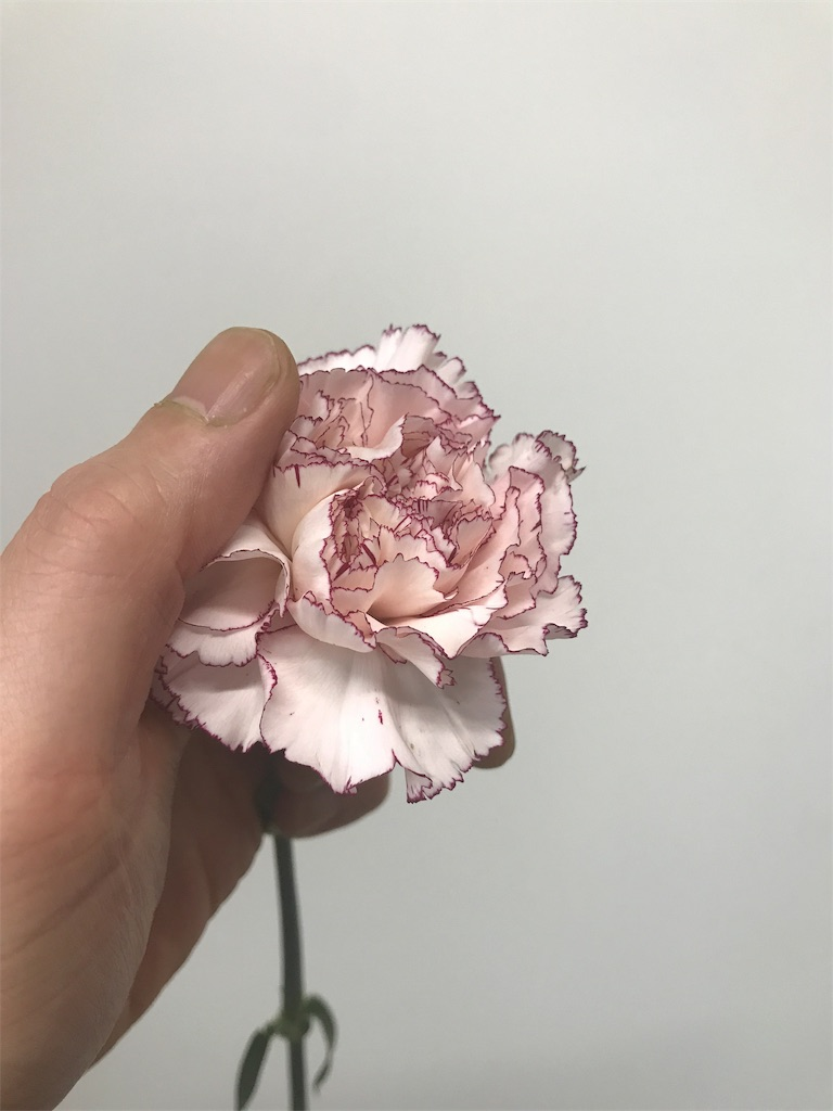 f:id:asunaro-flower:20190124165440j:image