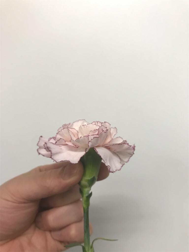f:id:asunaro-flower:20190124165749j:image