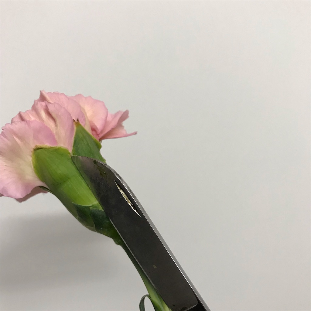 f:id:asunaro-flower:20190124165937j:image