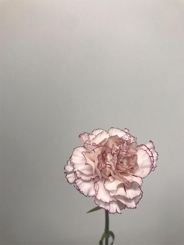f:id:asunaro-flower:20190124170335j:image