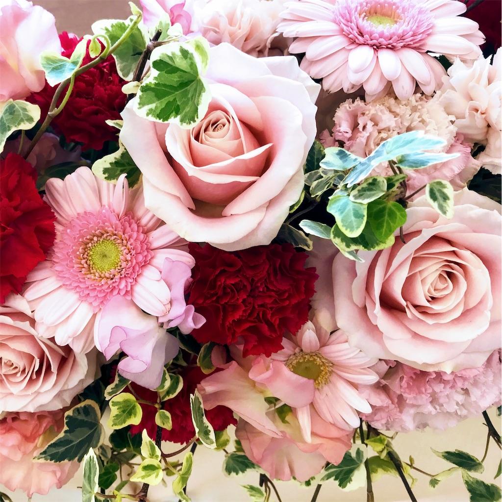 f:id:asunaro-flower:20190124171232j:image