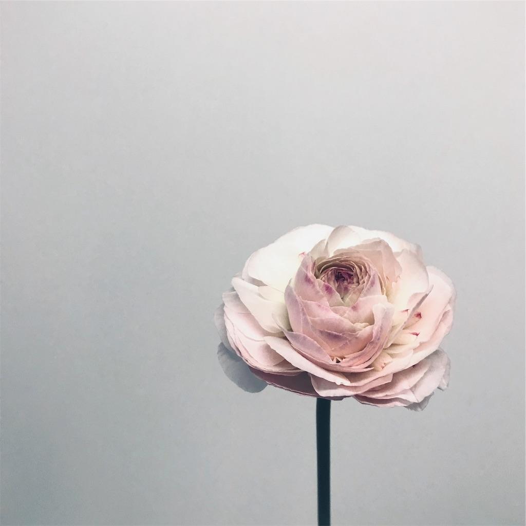 f:id:asunaro-flower:20190124171900j:image