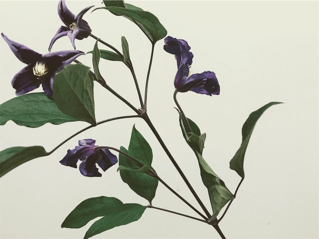 f:id:asunaro-flower:20190125025114j:image