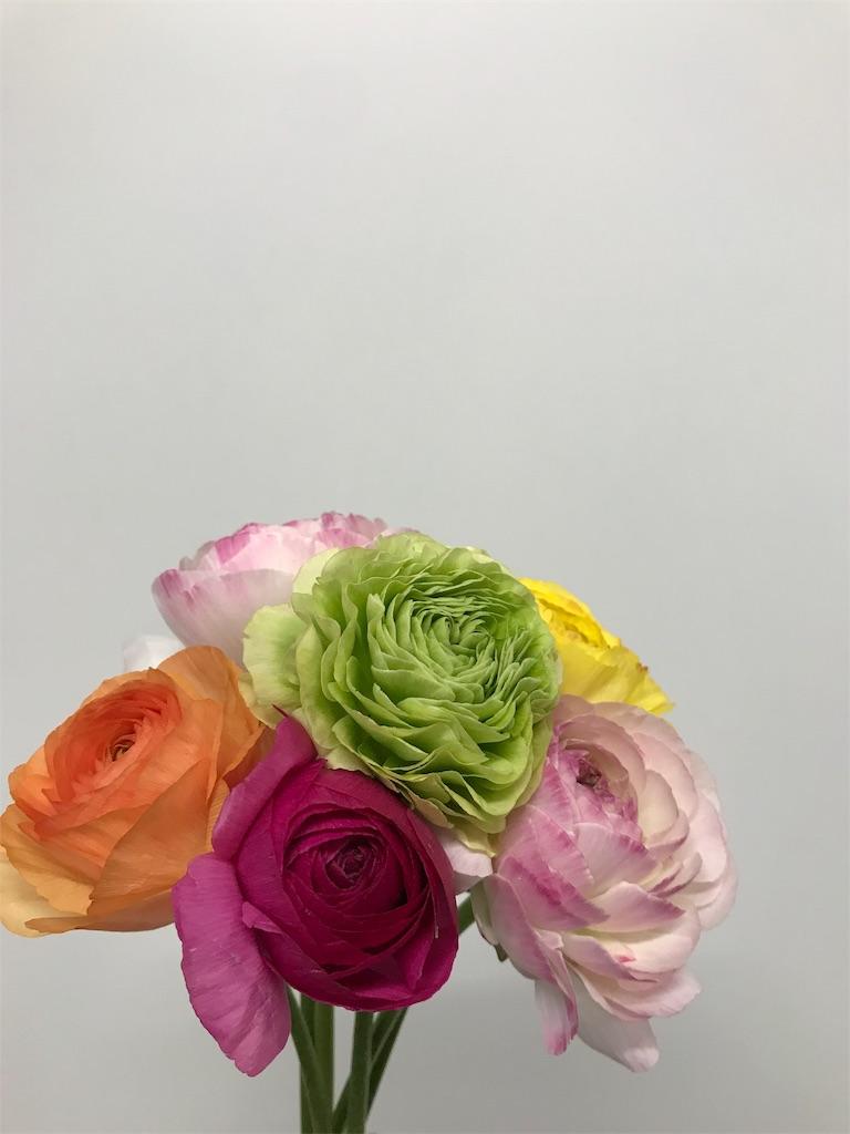 f:id:asunaro-flower:20190131163518j:image