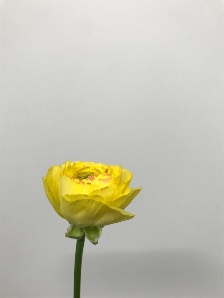 f:id:asunaro-flower:20190131164639j:image