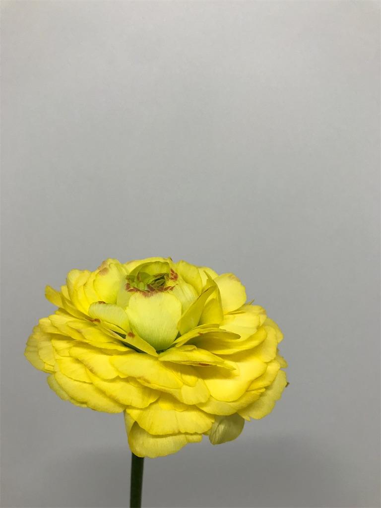 f:id:asunaro-flower:20190131164730j:image