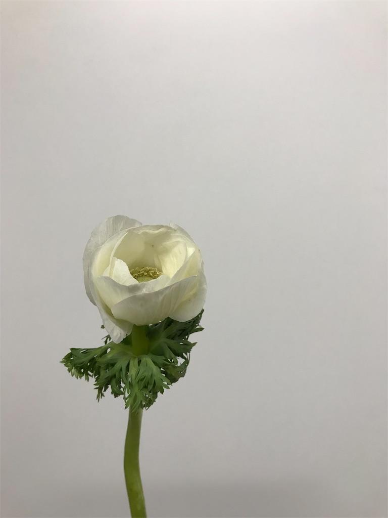 f:id:asunaro-flower:20190131165431j:image