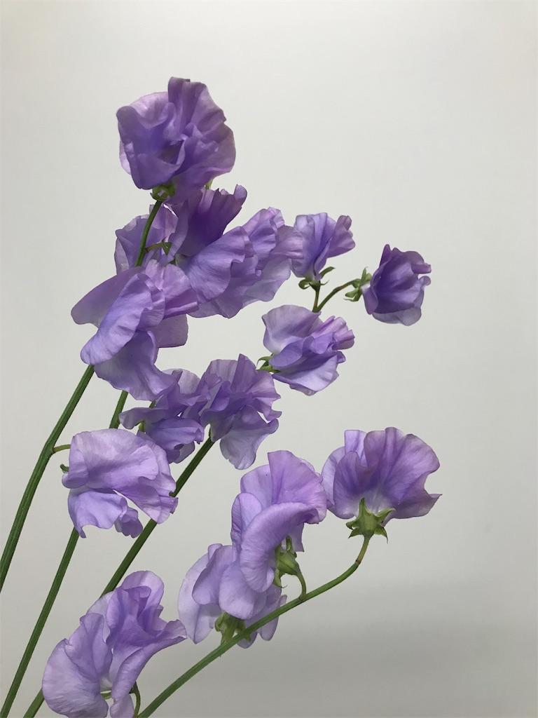 f:id:asunaro-flower:20190131184640j:image