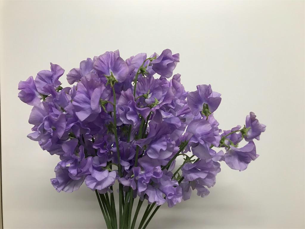 f:id:asunaro-flower:20190131221522j:image