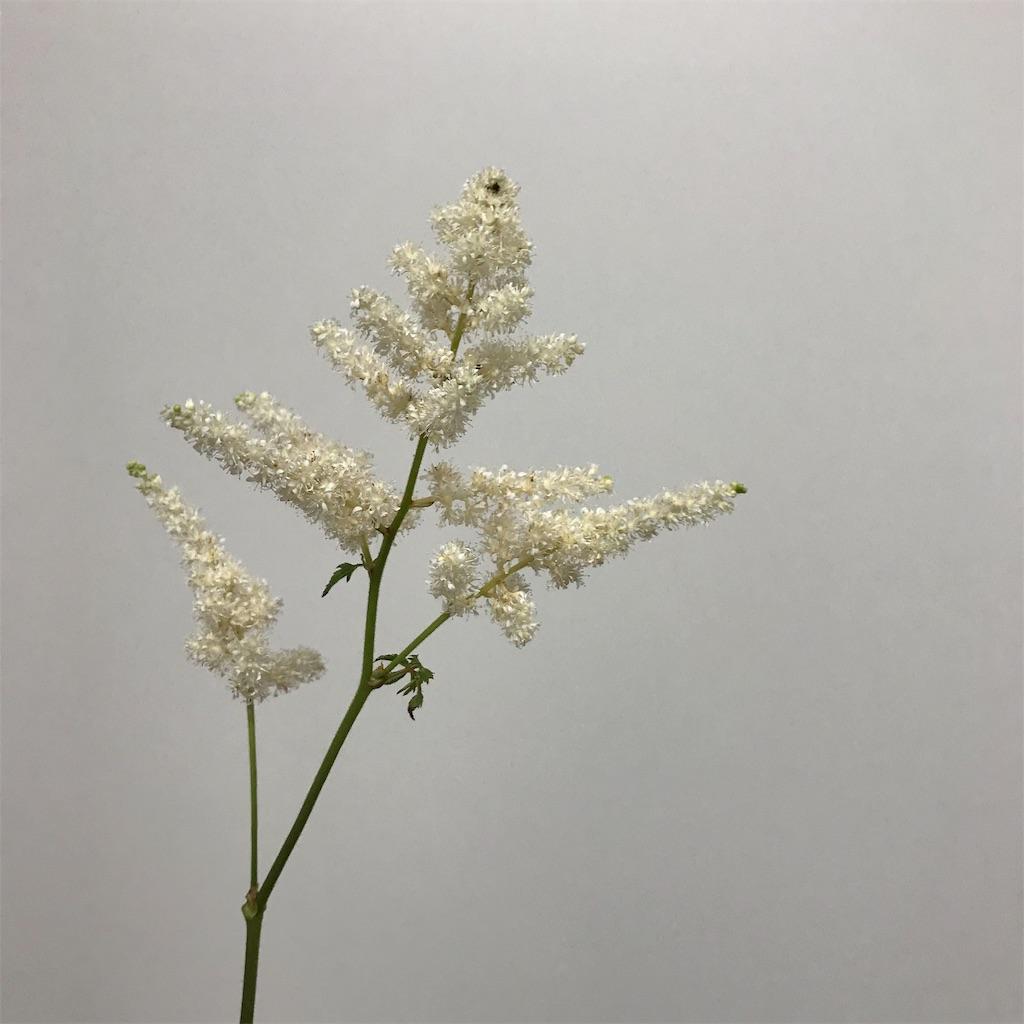 f:id:asunaro-flower:20190131221620j:image