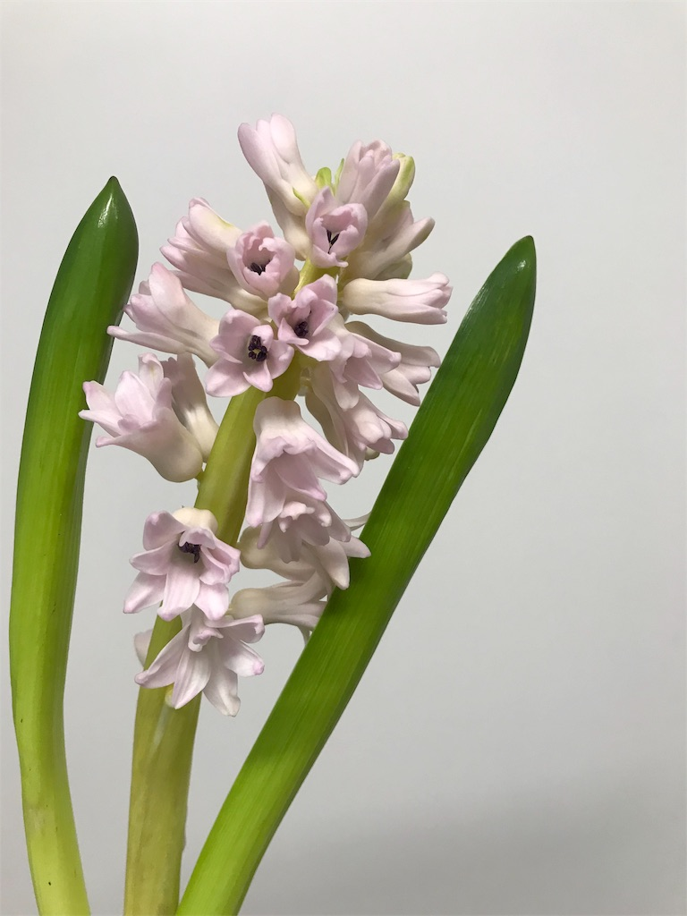 f:id:asunaro-flower:20190131223617j:image