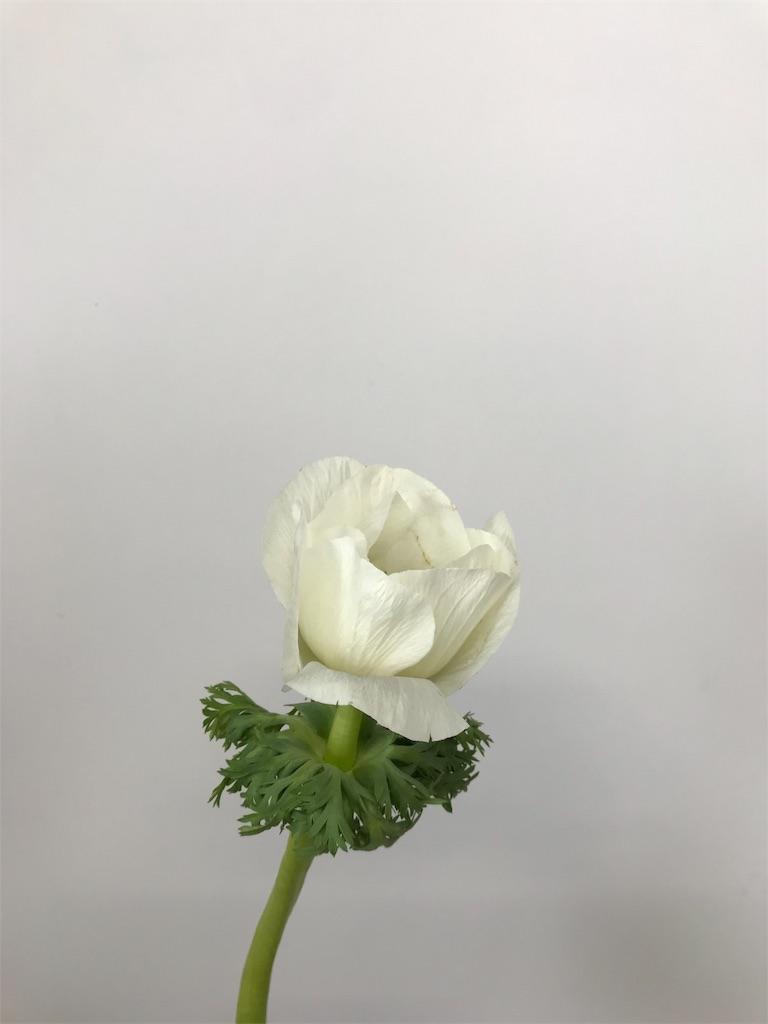 f:id:asunaro-flower:20190201101551j:image