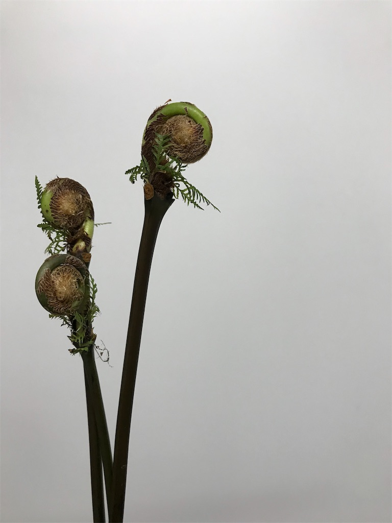 f:id:asunaro-flower:20190201104502j:image