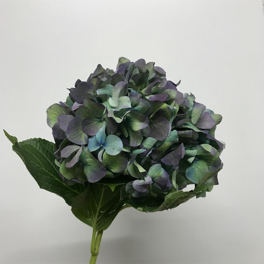 f:id:asunaro-flower:20190205083553j:image