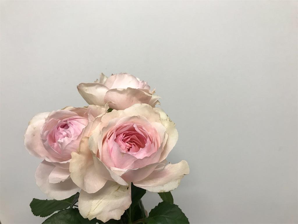 f:id:asunaro-flower:20190205175124j:image