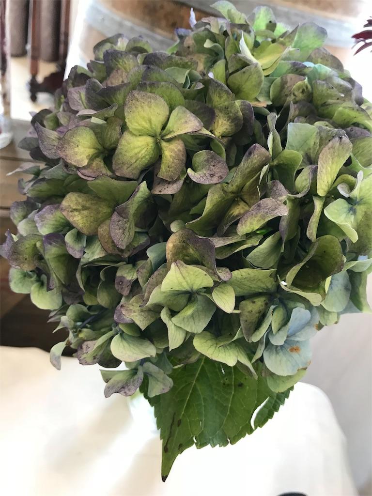 f:id:asunaro-flower:20190205183529j:image